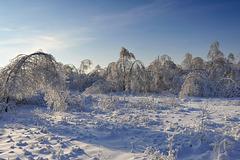 Arbres couverts de glace près de Moscou - Ледяной лес