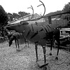 Cornered Reindeer
