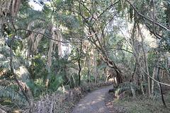 Vojeto laŭlonge de la akvofala parko