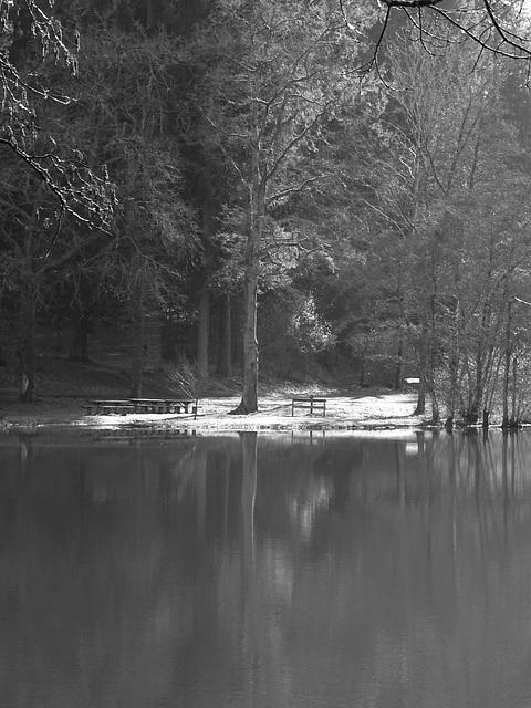 Quiétude au bord de l'étang / Quietness by the pond