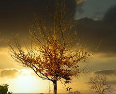 1 (45)...austria tree...sundown...autumn...herbst