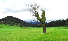 Schnifis Österreich