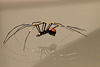 Glass spider (Explored)