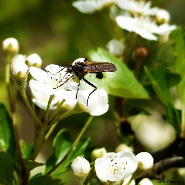 Eine von zehntausend Stechmückenarten...