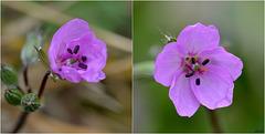 Fleurettes des talus !