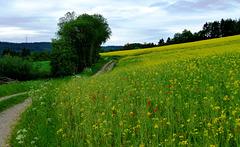 DE - Schleiden - Höhentour trail
