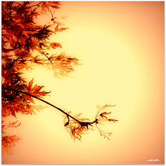 Herbstanfang - beginning of fall