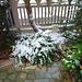 la plante sous la neige
