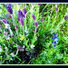 Lavender and lupin. Wildlife impression in green, mauve and blue.