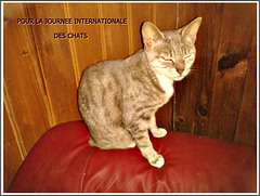 JOURNEE INTERNATIONALE DES CHATS
