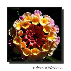 Lantana ( Dans mes tiroirs N°1 )