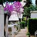 Rome - Cimitero Acattolico - Protestantischer Friedhof