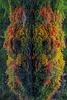 """das bunt-fröhliche """"Monsterchen"""" vom Rhododentronpark"""