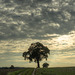 Sept 28: another lone tree