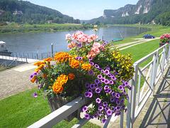 Rathen - Elbtal mit Blumen