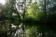 Rivière dans les sous bois
