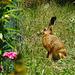 Unterm Baum im grünen Gras sitzt ein kleiner Osterhas'! Under the tree in the green grass sits a little Easter Bunny!
