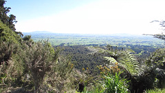 From Kaimais Lookout