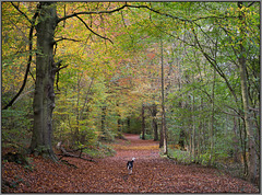 Eckington woods, South Sheffield - featuring 'Bella' the Border collie.