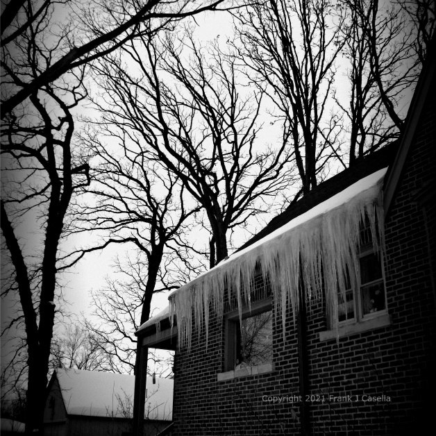 Winter Trees and Icicles - Square Holga Effect