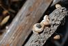 Caracóis, Snails, Escargots...