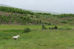 zwischen Husavik und Akureyri (© Buelipix)
