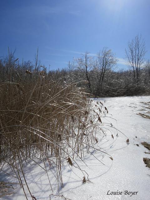 Nature verglacée