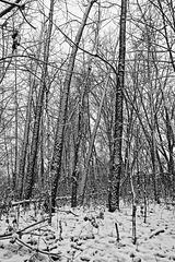 Couverture de neige/First Snow