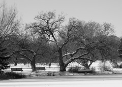 cold black & white friday