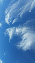 mares' tails