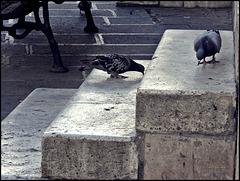 Zwei Tauben - drei Stufen