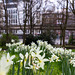 Frühling in Bremen