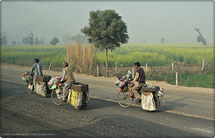 sellers on bycicle (Rajastan)