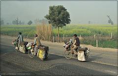sellers on bycicle (Rajastan)