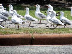 Gull Line-up.