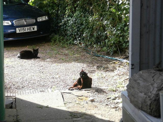 Pippin and Boo enjoying the sun