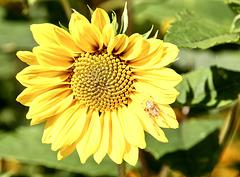 Die Spinne genießt offenbar die Wärme auf der Blüte :)
