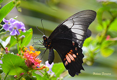 Flowers and Butterfly.