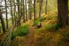HFF, Woodland Walk