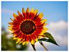 Blumengrüße ... (PiP)