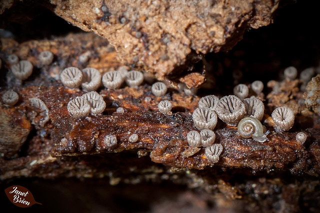 243/366: Impossibly Tiny Snail in Mini Fungus Forest