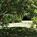 A pomegranate grove