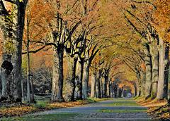 Der Herbst zeigt seine Farben