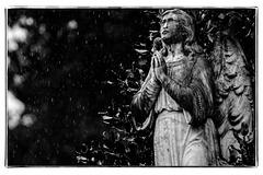 Praying Angel in the Rain