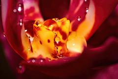 .......das Innenleben meiner Orchidee.......