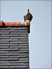 sur le toit du monde,,