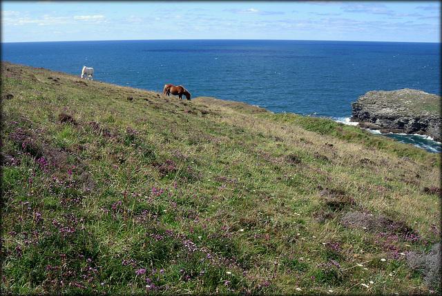 Ponies on Treaga Hill