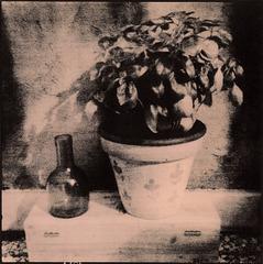 Bottle and basil vase
