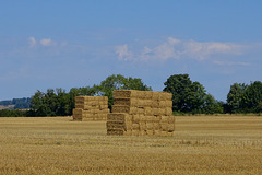 Cranborne fields