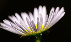 ..........das Licht zieht die Blüten nach oben........